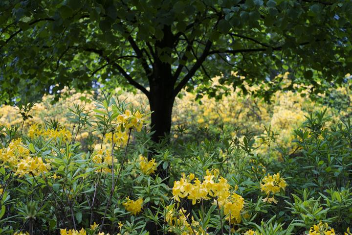 gallery_gardensandart_pic21.jpg