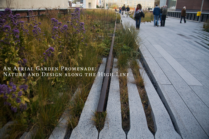 gallery_thehighline_pic1.jpg