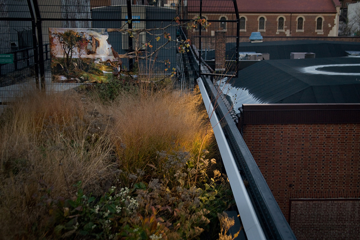 gallery_thehighline_pic23.jpg